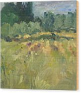 Field In Italy Wood Print