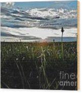 Field Of Alfalfa 5 Wood Print