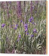 Field Of Bearded Iris Wood Print