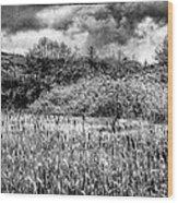 Field Of Cattails II Wood Print