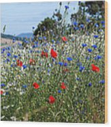 Field Of Colour Wood Print