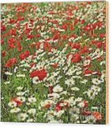 Field Of Daisies And Poppies. Wood Print