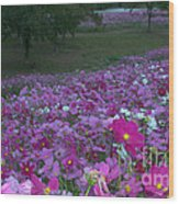 Field Of Flowers Along The Highway  Wood Print