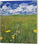 Field Of Flowers, Grasslands National Wood Print