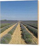 Field Of Lavender. Valensole Wood Print by Bernard Jaubert