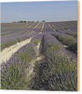 Field Of Lavender. Valensole. Provence Wood Print