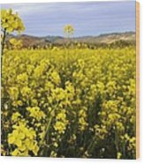 Field Of Mustard Flowers Wood Print