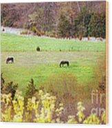 Field Of My Dreams Horses Wood Print