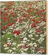Field Of Poppies And Daisies In Limagne  Auvergne. France Wood Print