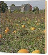 Field Of Pumpkins Wood Print