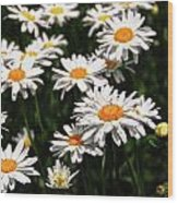 Field Of White Dasies Wood Print
