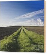 Field Path In Limagne. Auvergne. France. Europe Wood Print