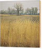 Fields At The Lillian Annette Rowe Bird Wood Print