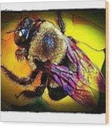 Fierce Bumblebee Wood Print