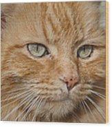 Fierce Warrior Kitty Wood Print