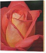 Fiery Color Rose Wood Print