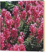 Fiery Pink Wood Print