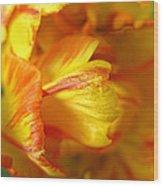 Fiery Tulip Wood Print