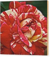 Fiesta Rose Wood Print