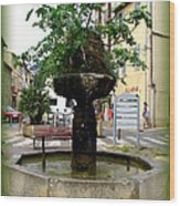 Fig Tree Fountain In Cassis Wood Print