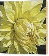 Figaro Yellow Dahlia Wood Print
