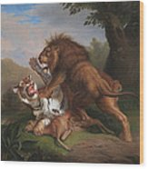 Fight Of A Lion With A Tige Wood Print