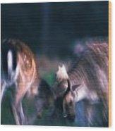 Fighting Fallow Deer Wood Print
