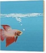 Fighting Fish Under Water Wood Print