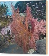 Fiji Sea Fan Scenic Wood Print