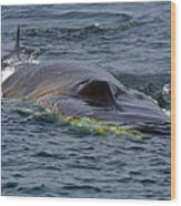 Fin Whale Charging Wood Print