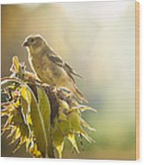 Finch Aglow Wood Print
