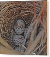 Finch Nest With Eggs  Wood Print