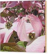 Fine Art Prints Pink Dogwood Flowers Wood Print