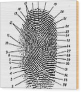 Fingerprint Diagram, 1940 Wood Print