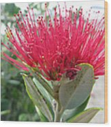 Fiore Rosso E Grasso Wood Print