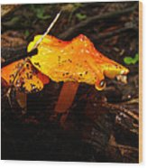 Fire In The Forest - Hygrocybe Cuspidata Wood Print