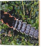 Firefly Larva Wood Print