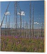 Fireweed  Epilobium Angustifolium Glacier National Park Usa -1 Wood Print