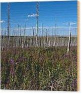 Fireweed  Epilobium Angustifolium Glacier National Park Usa -2 Wood Print