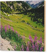 Fireweed In Henson Creek Drainage Wood Print