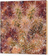 Fireworks Explosion Wood Print by Marilyn Sholin