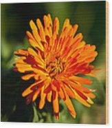 Firey Sunburst Wood Print