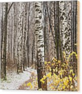 First Snow. Hidden Path Wood Print
