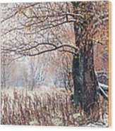 First Snow. Old Tree Wood Print by Jenny Rainbow