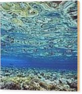 Fish And Coral Underwater Reflected In Wood Print