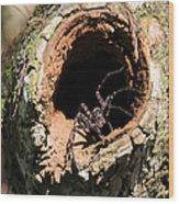 Fish Eating Spider Wood Print