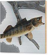 Fish Mount Set 02 Bb Wood Print