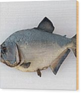 Fish Mount Set 04 A Wood Print