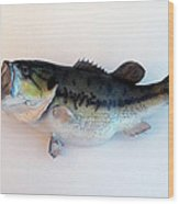 Fish Mount Set 07 A Wood Print