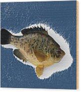 Fish Mount Set 08 C Wood Print